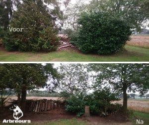 tuinonderhoud, laurier snoeien, conifeer snoeien, houtwal maken