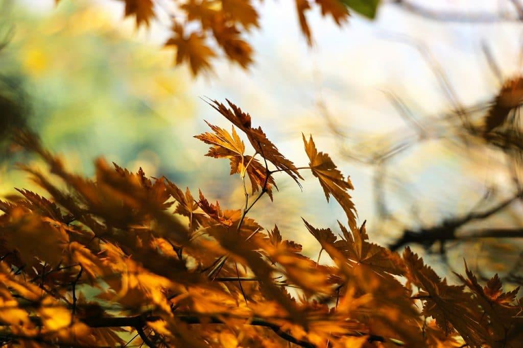 Provincie Drenthe stopt met bladeren ophalen