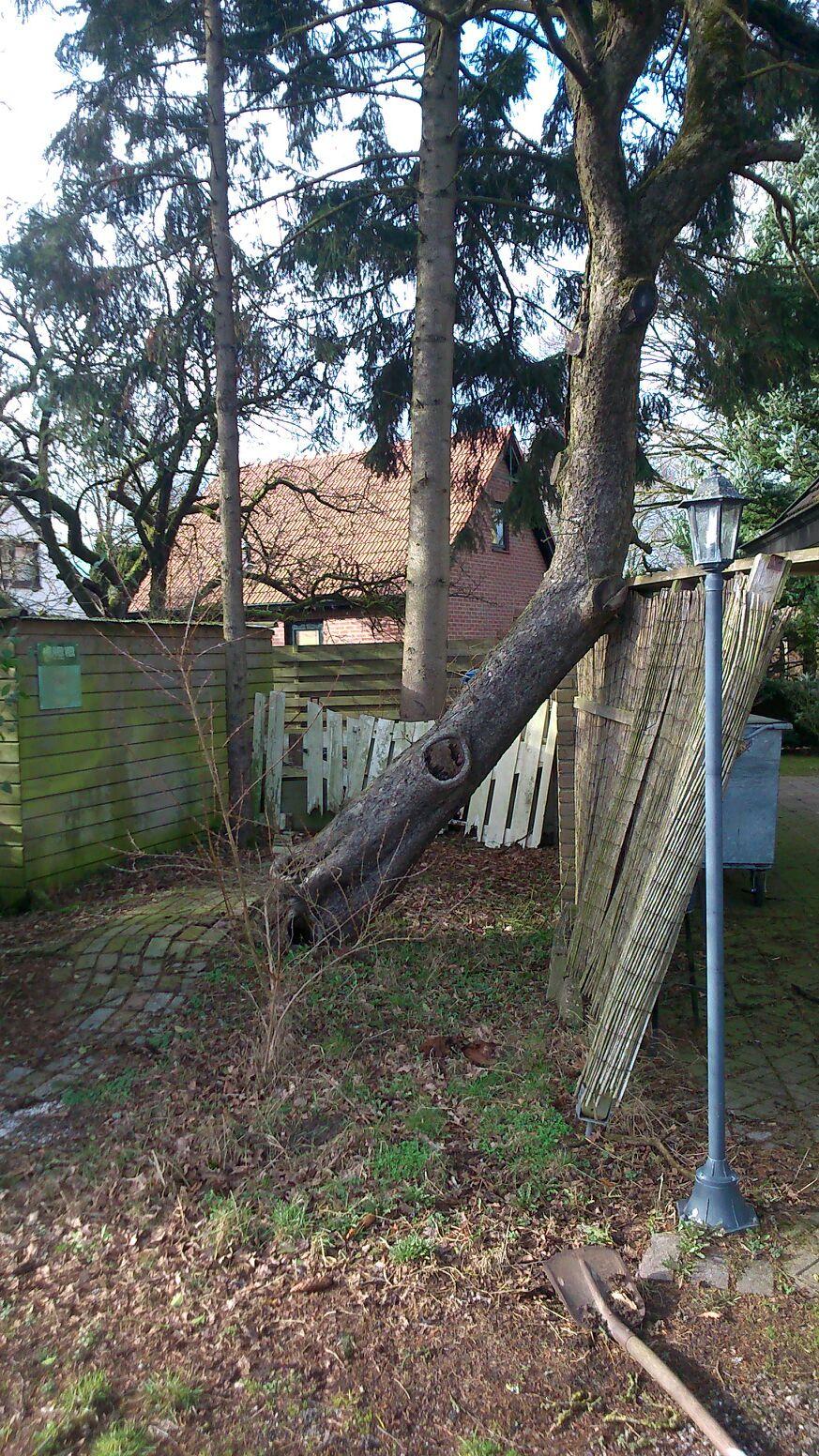 Gevaarlijke boom kappen Drenthe
