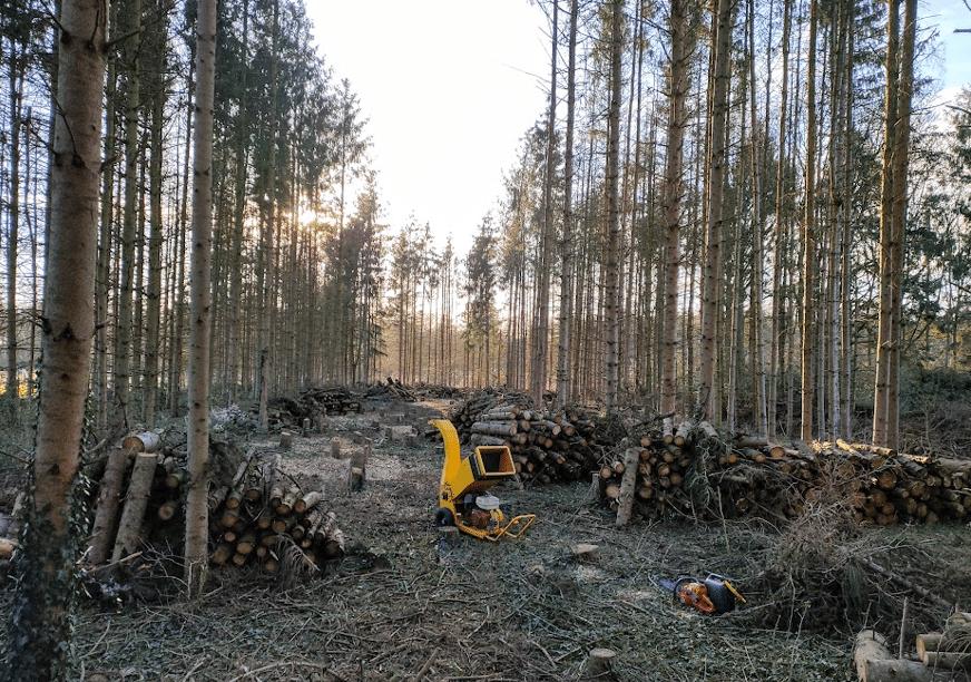 Bomen kappen, zieke sparren omzagen en verwerken met houtversniperaar Haeksler hakselaar